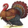 Slow Turkey