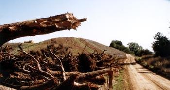 timber3-9746.jpg