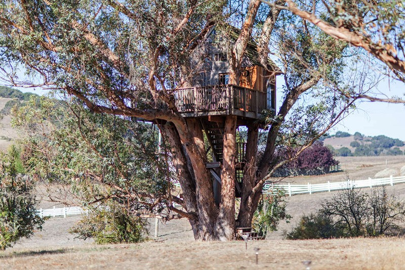 TREETOP LODGING Read the fine print when looking for a real treehouse stay.