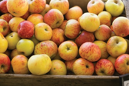 BY THE BUSHEL The harvest of Gravensteins coincides with the Gravenstein Apple Fair. Coincidence?