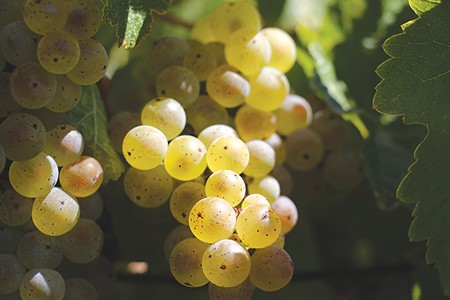 PAIRED IT FROM THE GRAPEVINE Better methods of producing dry Riesling are making the varietal a favorite with 