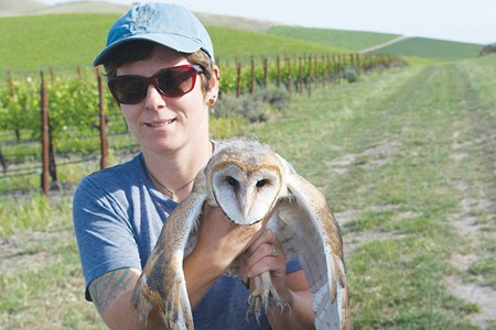 DEATH FROM ABOVE Humboldt State University researcher Carrie Wendt is studying the impact of owls on vineyard rodents in the Napa Valley.