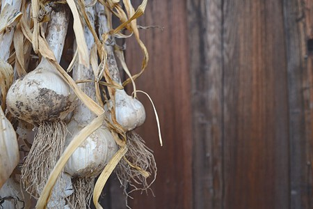 WHAT'S THAT SMELL?  For a good crop of garlic, get yours in the ground now.