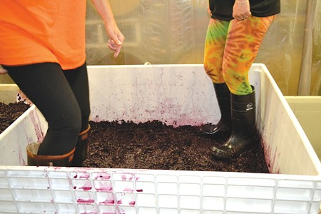OLD SCHOOL  Sonoma Portworks relies on low-tech boot power to stomp their grapes.