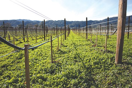 SEA CHANGE  In the wake of California's historic drought, the free-for-all use of groundwater is coming to an end as Napa and Sonoma counties work to implement a new state law that requires they monitor and regulate their water use.