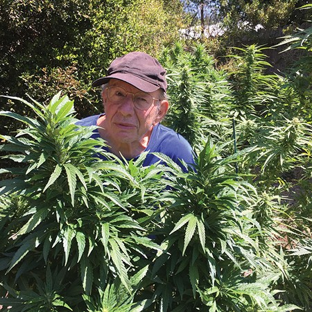 IN THE WEEDS Jonah Raskin reckons he's done 36 pot harvests over the years. That's not so many, kids.
