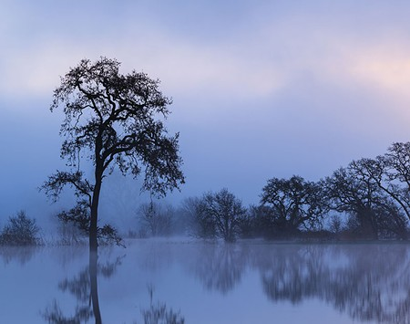 MISTY MORNING  The Laguna de Santa Rosa is one of Brenda Tharp's favorite places to shoot photos in Sonoma County. - BRENDA THARP