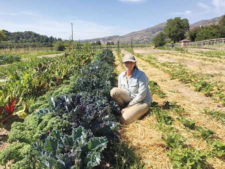 CABERNET SUBSIDY Rachel Kohn Obut leases her farm from sympathetic wine-industry landowners.