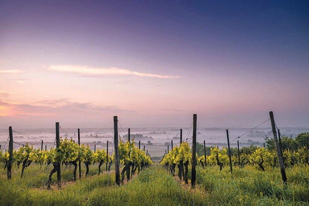 Despite the recent calamity, Napa's wine industry endures. - PHOTO PROVIDED BY PEXELS