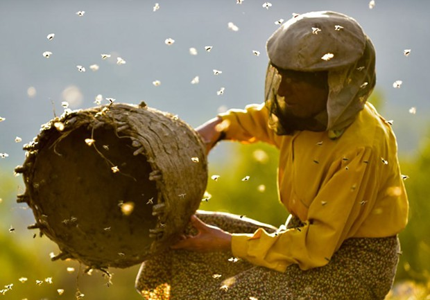 Buzzworthy Macedonian woman Hatidze Miranova practices an ancient method of honey gathering in new documentary.