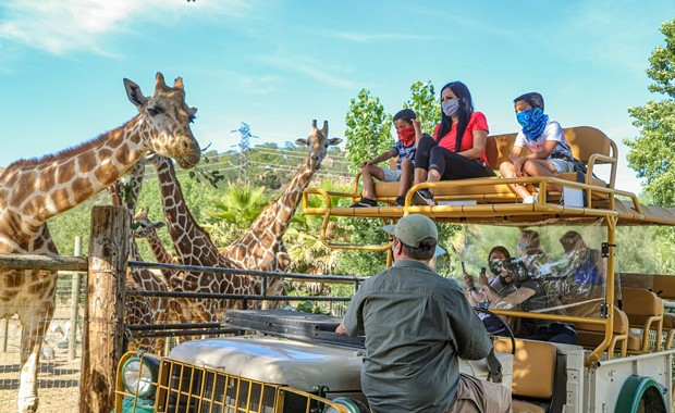 Safari West Launches Virtual 'Tour' for Underserved and Hospitalized Children