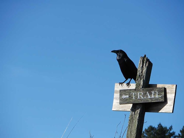 AS THE CROW FLIES LandPaths acquired Ocean Song in October.