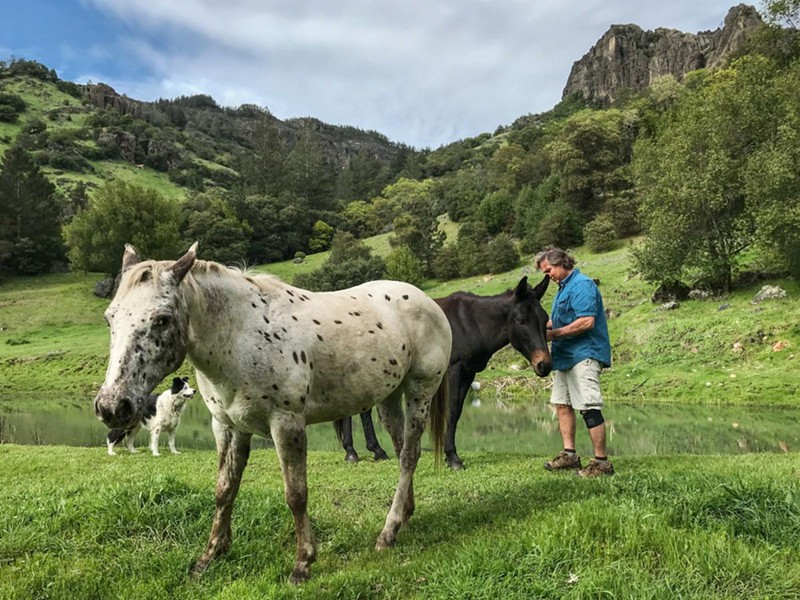 Video producer and care taker Gary Feller and his dog, Zoe, tend to his neighbor's horses and mule who graze on the 165 acres of land he oversees above Calistoga. - CLARK JAMES MISHLER
