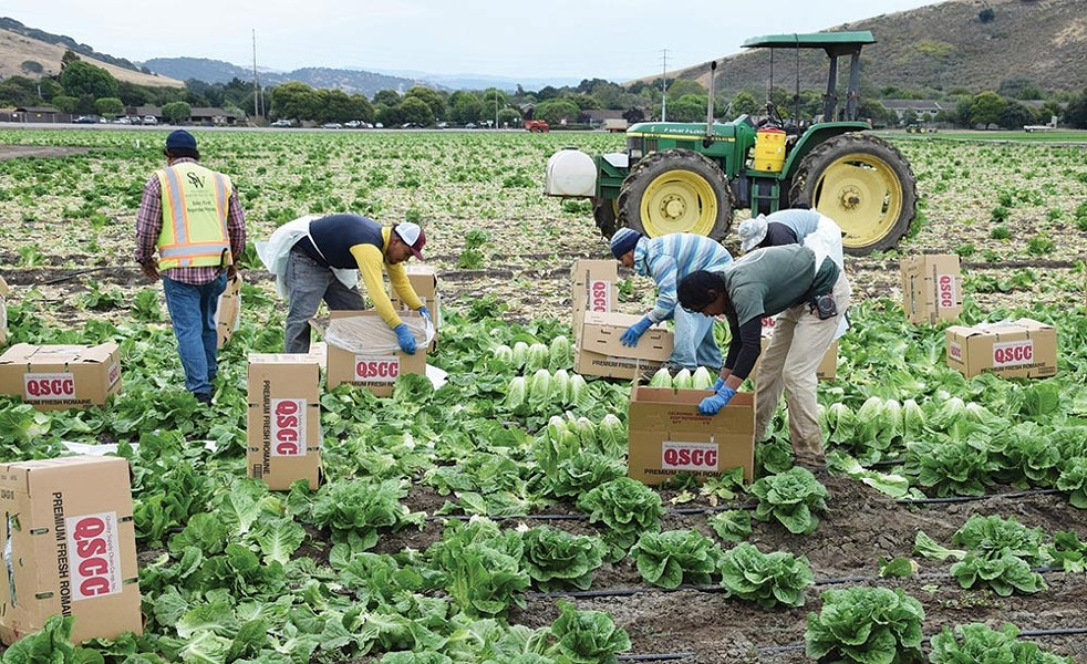 Eat to Live Mexican immigrants harvest the American bounty but won't eat it out of fear.