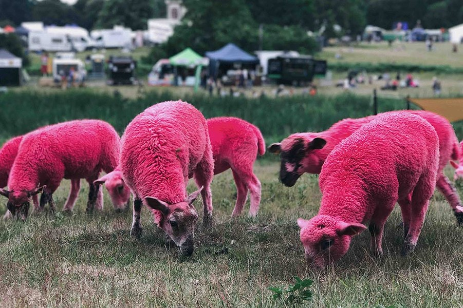 DYED IN THE WOOL The world needs more pink sheep. - ANNIE SPRATT