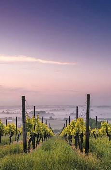 Despite the recent calamity, Napa's wine industry endures.