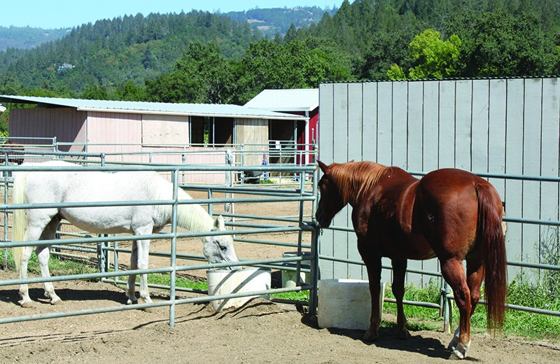 FIRE FRIENDS Jake, right, was rescued from the Valley Fire and became friends with Hero, a longtime resident of Sunrise Horse Rescue. - PHOTO COURTESY SUNRISE HORSE RESCUE