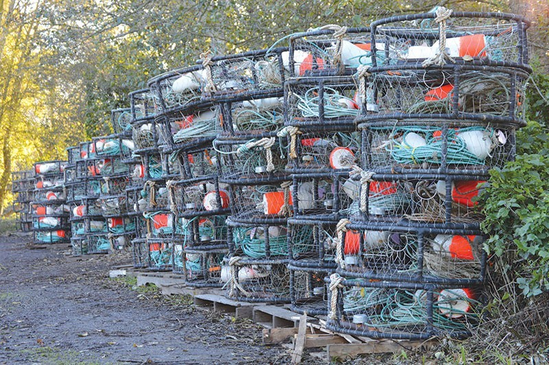 Endless rows of empty, land-bound crab pots are a common sight these days - TOM GOGOLA