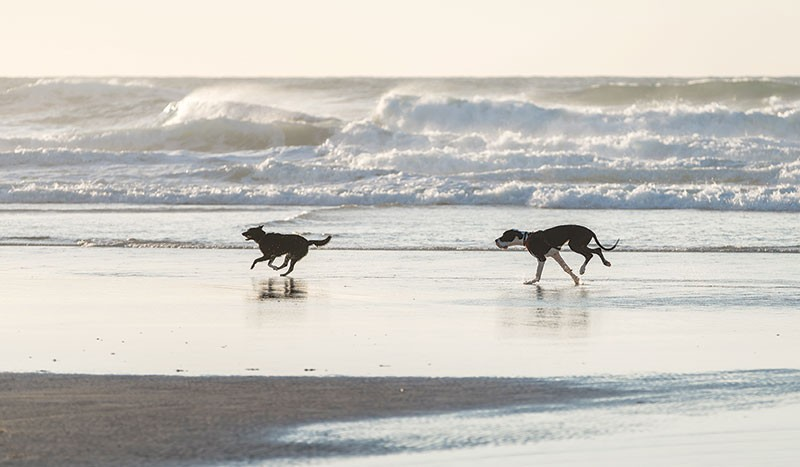 DOGS' LIFE  Marin Countyites hope to reclaim the Golden Gate National Recreation Area for their four-legged friends.