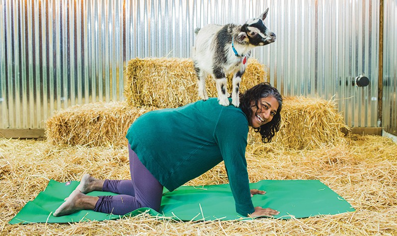 GOT YOUR GOAT But why else take up yoga, if not so little cloven hoofs can perch on your back?