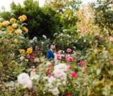 Marin Sanctuary Marks 75 Years of Arts and Gardens