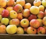 Iconic Fruit