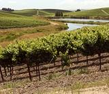 Coho vs. Pinot