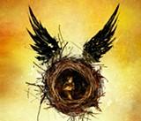 July 30: Potter: the Next Generation in Sebastopol, Napa & Corte Madera