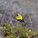 46711e1a_bird.jpg