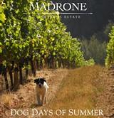af287cc6_vineyard-dog.jpg