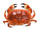 a9e3199c_crab_feed.jpg