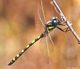 4dc28fb9_dragonfly_sm.jpg