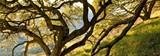 7acb20bf_tree.jpg