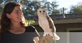 432f9459_the_hungry_owl_project_photo.jpg