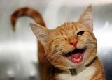 laughing_cat_5_jpg-magnum.jpg