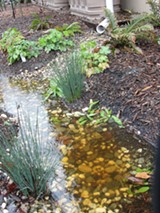 6fab647d_141115_npe_blurb_-_rain_garden_photo.jpg