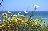 7afff383_beach_and_summer_flowers.jpg