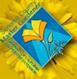 9aa3023c_scmg_logo.jpg