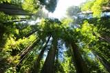 2b04ea58_sequoia-274158_1920.jpg