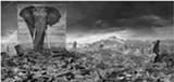 Nick Brandt, Wasteland with Elephant, 2015 - Uploaded by Ann Trinca