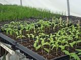 a6dc8322_food-plant-starts-urban-gardens-1024x768.jpg