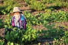 <b>WORKING FOR YOUR FOOD</b> California's largely immigrant field workers would benefit from Obama's executive action—but only if they qualify. Many do not.