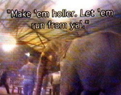 A shot from the videotape, provided by PETA, of Tim - Frisco training elephants at his family's facility in - Oklahoma.
