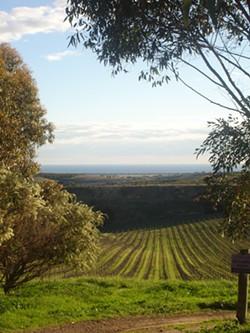 TRICIA CHILDRESS - A vineyard in McLaren Vale, South Australia