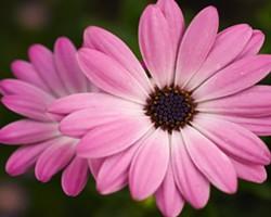 pinkflower_jpg-magnum.jpg
