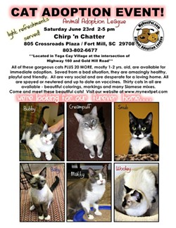 cat_house_adoption_event_3_jpg-magnum.jpg