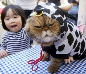cat-in-cow-costume