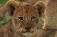 Charity: <i>The Last Lions</i>