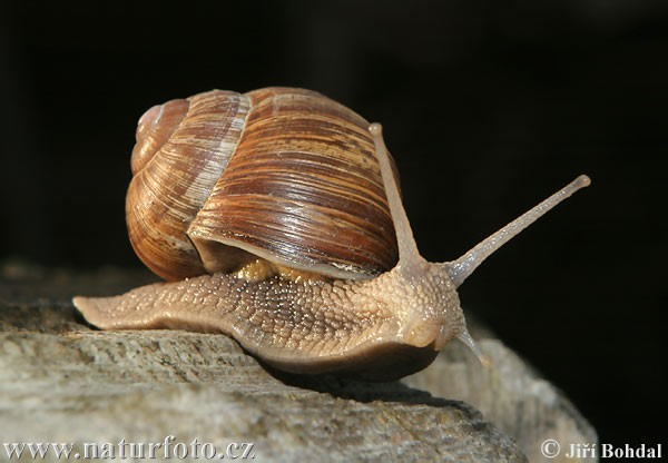 Court system's communications department mascot, Lightning the Wonder Snail