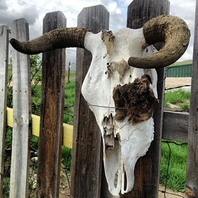 Dem Bones: South Dakota